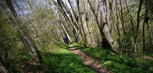 MTB-Weesen-Trails-Quadrologie_20150415_3581_pano